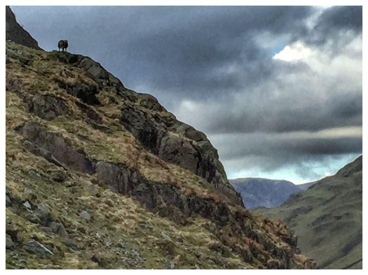Sheep on ravine, Keswick, Seatoller. Lake District