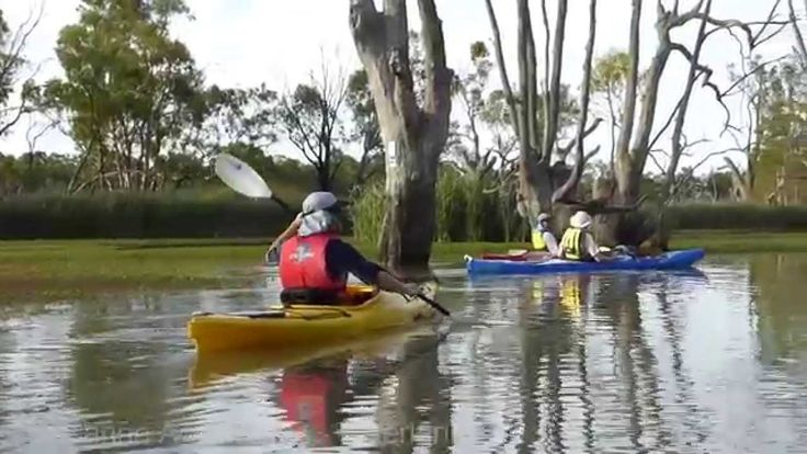 Loch Luna, near Barmera, South Australia - a beautiful wetland, off of the Murray River - a super spot for kayaking - could spend all day here and only just see all of it.  Tours and kayak hire available from Canoe Adventures 0421167645