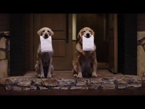 145 best FUNNY ANIMAL COMMERCIALS images on Pinterest ...