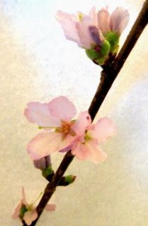 @vontagzutagmari Barbarazweige blühen. http://vontagzutag-mariesblog.blogspot.com