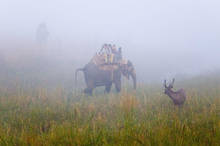 Elephant Safari in Corbett National Park