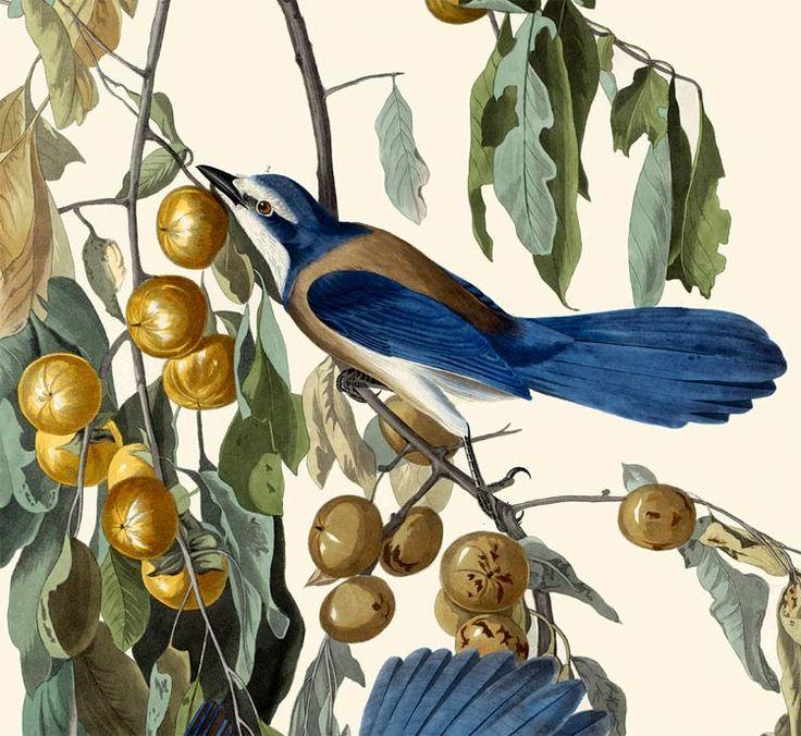 Canada Goose price - 1000+ images about Audubon Prints on Pinterest | John James ...