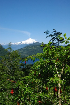 Fuchsia and volcano, Huerquehue National Park, Chile
