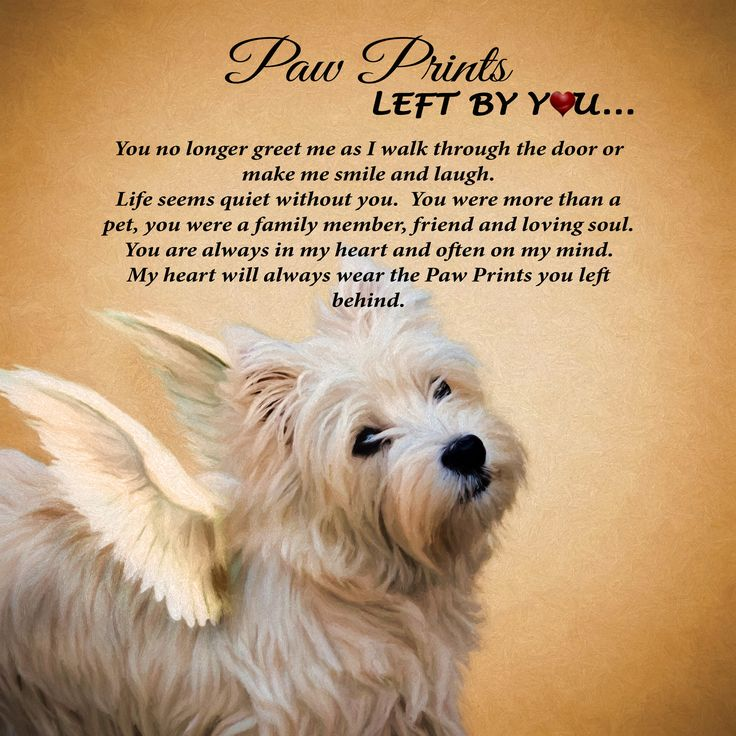 Dog Angel Quotes: 25+ Best Pet Loss Quotes On Pinterest
