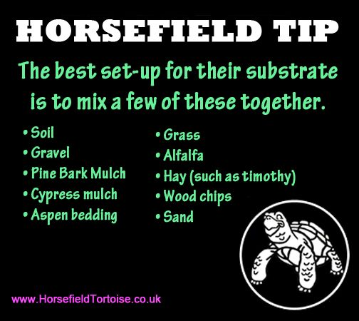 re-pin this tip of the day!  #horsefield #horsefield http://www.horsefieldtortoise.co.uk/course