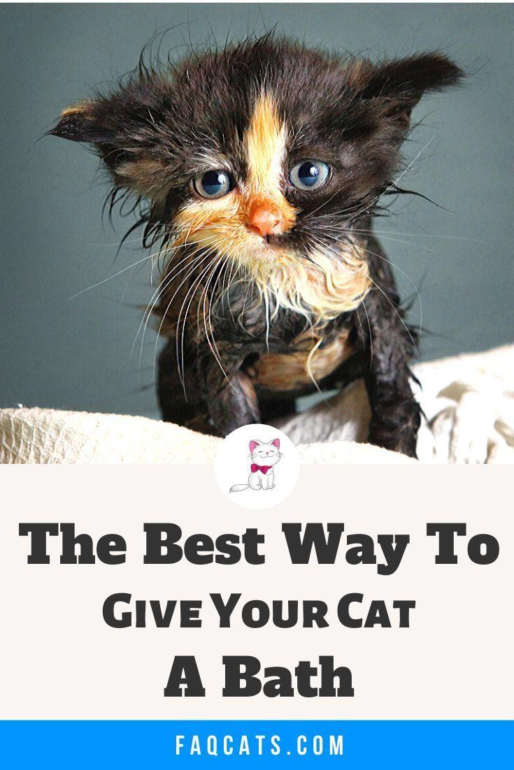 Giving Cats A Bath Cats Tabby Cat Dog Shampoo