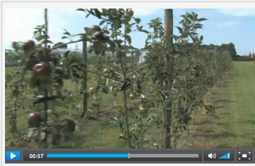 VIDEO:  Steps in commercialising a new apple - Brett Ennis, CEO of Prevar Ltd, explains how new apple varieties developed by Plant & Food Research are commercialised.
