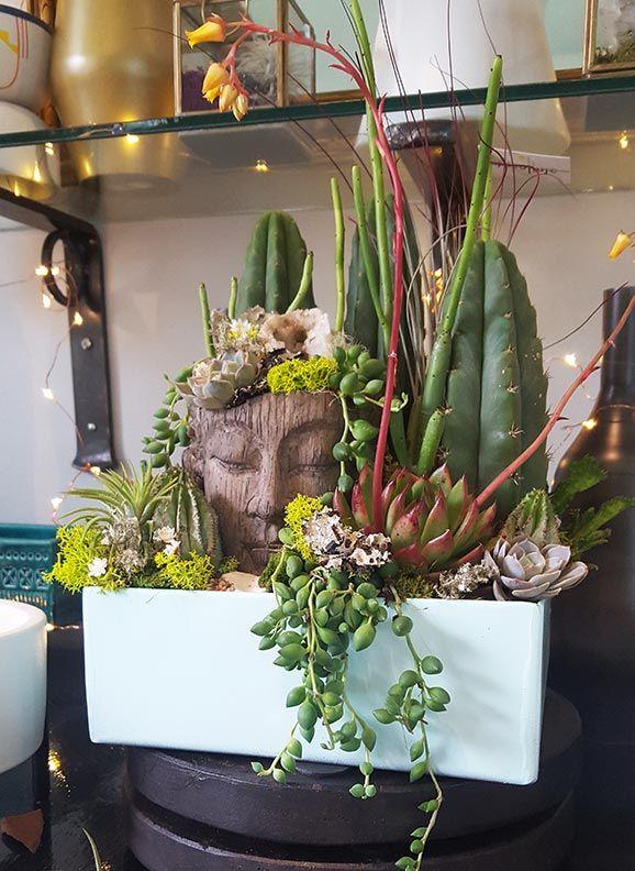 Buddha succulent and cactus container garden