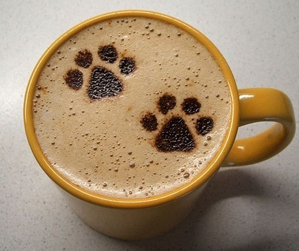 little kitty paws in a cup of latte