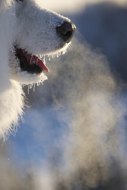 Cold breathCold Breath In Winter