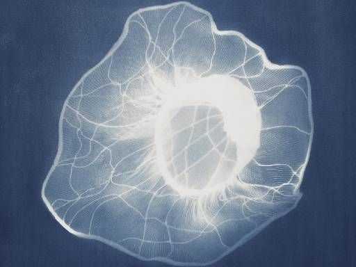 Nancy Wilson-Pajic, Hat Lacroix, 1998, cyanotype, Centre Pompidou