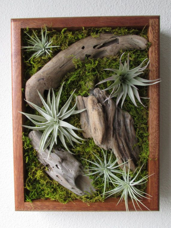 Tillandsia Living Wall By Midnight Blossom   Air Plant Wall Art Piece    Handmade Living Art With Driftwood, Moss And Live Air Plants