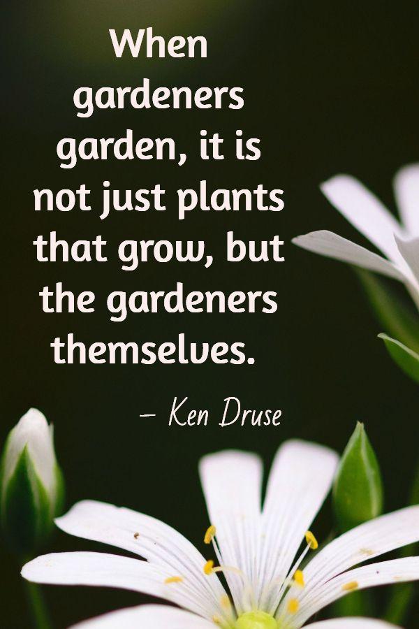 Best Garden Quotes 60 Quotes Sow Small Garden Gardening Quotes Inspirational Gardening Quotes Funny Garden Quotes