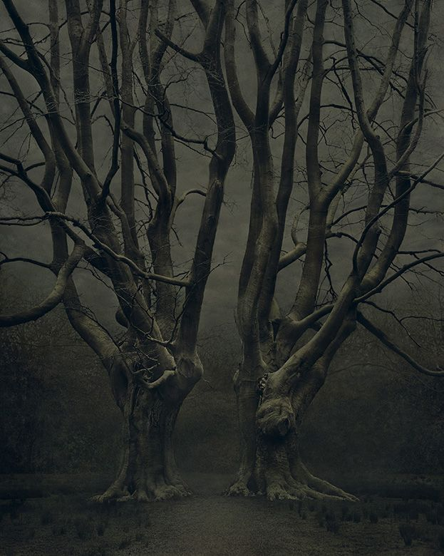 in the forest, dark and deep...