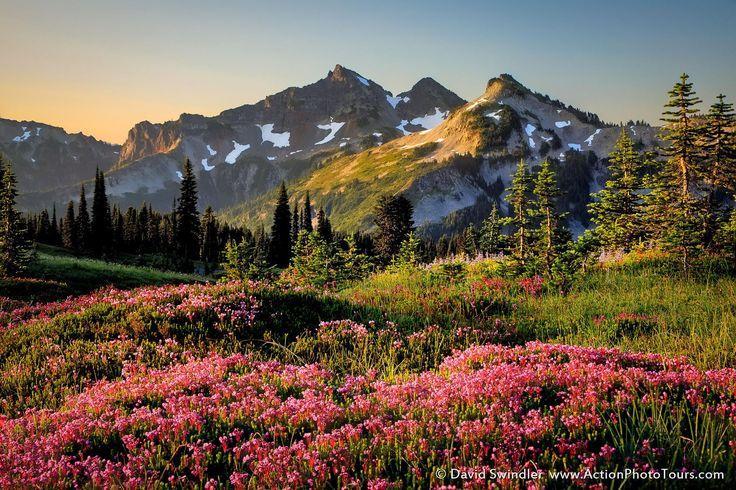 High Mountain Heather by David Swindler on 500px