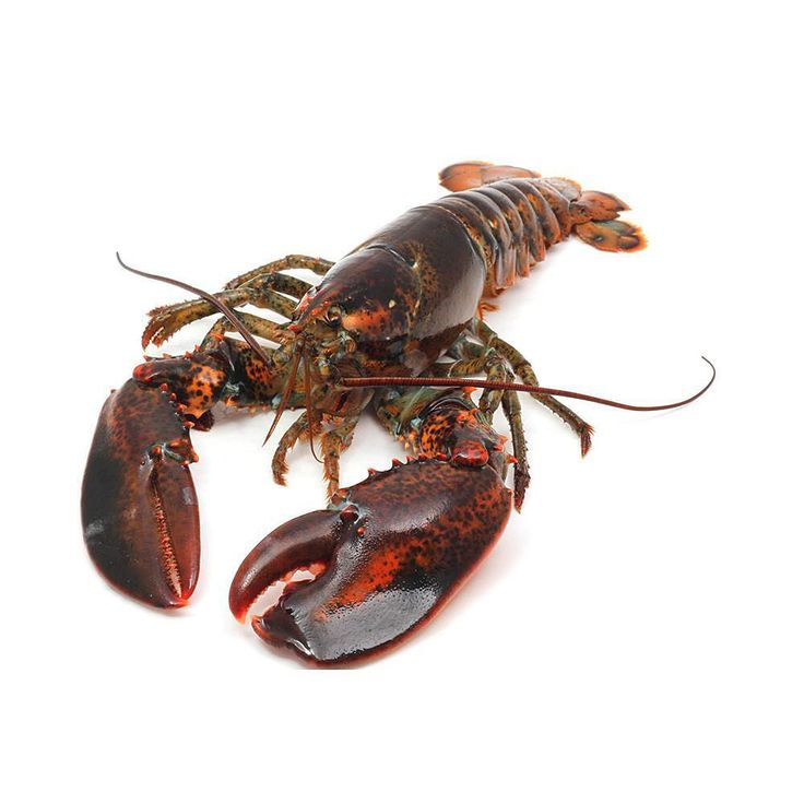 Live Boston Lobsters RM185/kg  Feast with family and friends!  #crab #fish #freshlivelobsters #freshlobsters #stillalive #bostonlobster #lobstermalaysia #shahalam #delivery #fish #seafood #wholesale #cheap #fresheggs #freshingredients #cookingingredients #vanillabean #crab #fish #premiumingredients #imported #airflownsalmon #airflown #norwegiansalmon #malaysia #chilledbeef #freshmeat #chinesenewyear #cny #chinesenewyearhampers