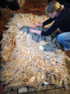 Vilt je eigen vloerkleed uit een ruwe schapenvacht | Vachtvilten met ruwe wol