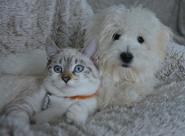 Cat and Dog Automatic Feeder