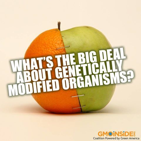 What's The Big Deal About GM Organisms? More Here: http://www.huffingtonpost.com/edison-de-mello-md-phd/gmos_b_3854198.html: Eye