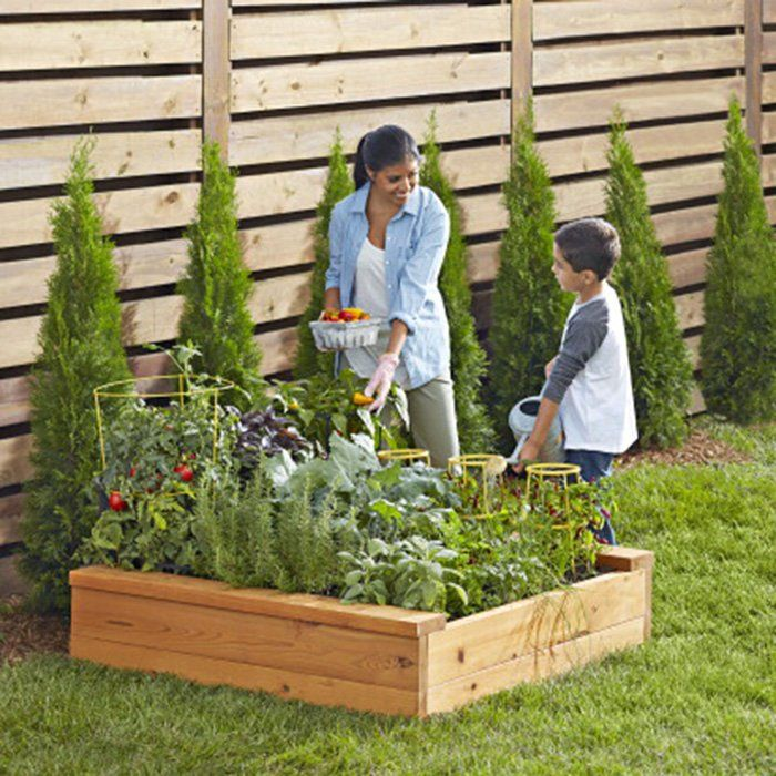 Creating Our First Vegetable Garden Advice Please: 390 Best Gardening Tips Images On Pinterest