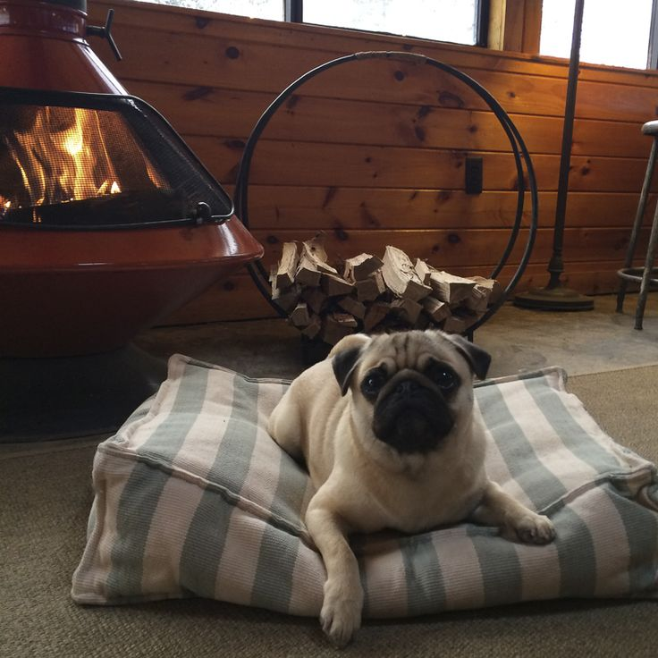 How to Choose Pet Friendly Accommodation http://www.thepugdiary.com/how-to-choose-pet-friendly-accommodation/ #thepugdiary #keepauspetfriendly #petfriendly