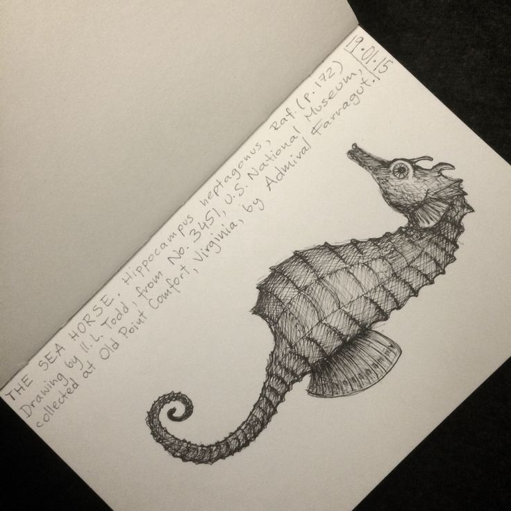 doodles | seahorse | based on L.Todd's drawing | Moleskine | Uni Pin 0.05