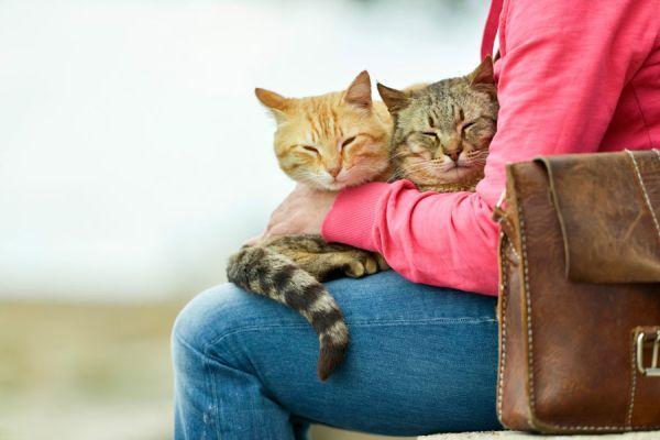 ***¿Por Qué los Gatos se Suben a las Piernas?*** Si en cuanto tomas asiento tu minino se acomoda en tu falda, aprende en esta nota por qué lo hace y qué significa para él....SIGUE LEYENDO EN.... http://comohacerpara.com/por-que-los-gatos-se-suben-a-las-piernas_18273h.html