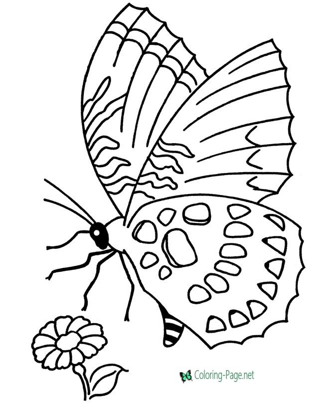 Flower And Butterfly Coloring Pages In 2020 Butterfly Coloring