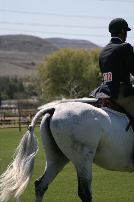 25+ best ideas about Horse Tail on Pinterest