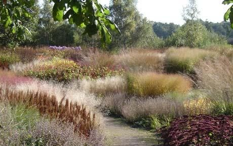 What I wouldn't give for my native plantings to look like this.  Piet Oudolf's design--Pensthorpe.  From http://www.telegraph.co.uk