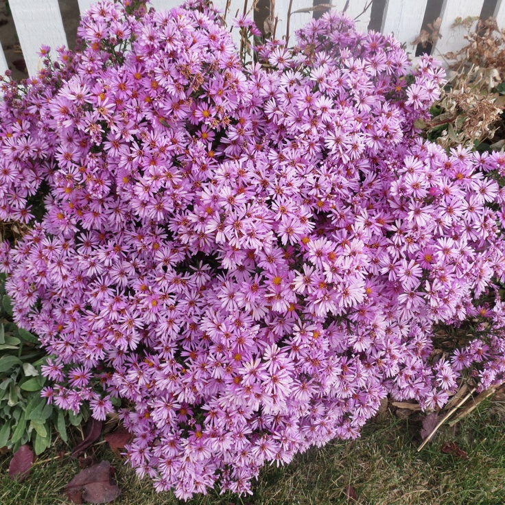 17 Best Images About Gardening On Pinterest Plants Sun