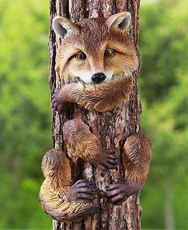 Animal Tree Huggers Outdoor Trees Outdoor Gardens