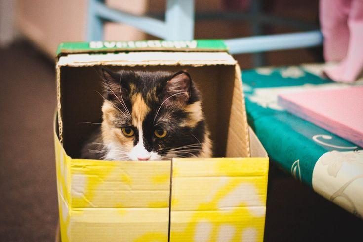 #Gatto #urina fuori dalla #lettiera consigli e soluzioni | Elicats Holistic Pets