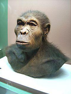 Representação do Homo habilis