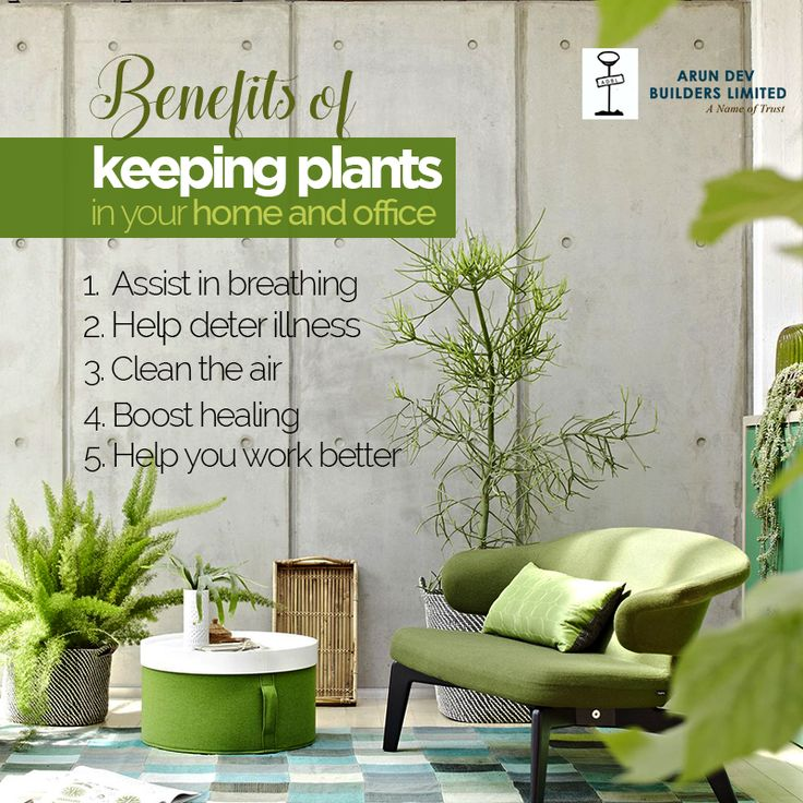 Tip Of The Day  Keep plants at your home and office for fresh and pure air.