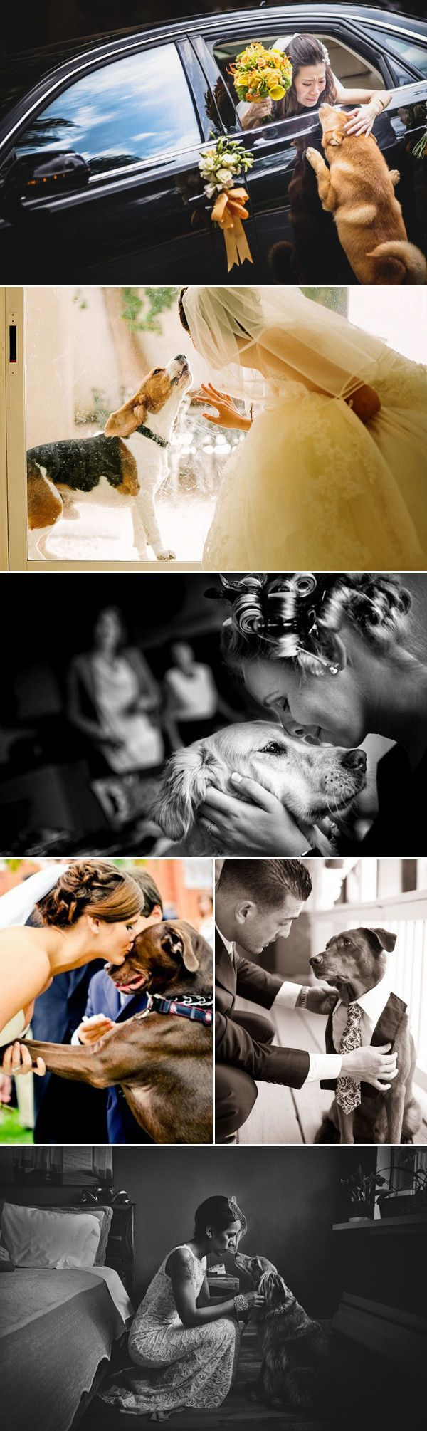 touching wedding photo ideas with dogs
