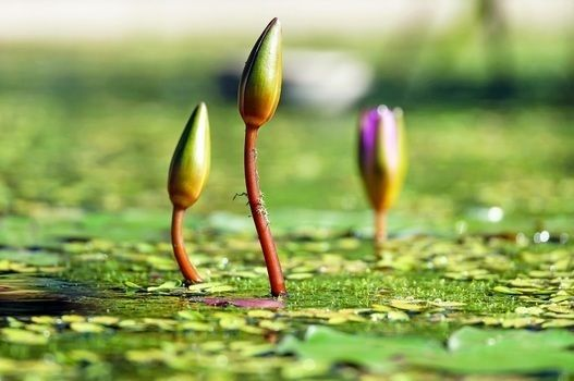 Liberty when it begins to take root is a plant of rapid growth.  #CouponHills #like4like