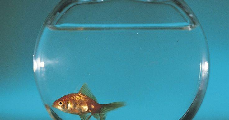 Como eliminar o odor de um tanque de peixes. Quando não está configurado corretamente ou cuidado, um tanque de peixes pode cheirar mal. Configurar o aquário corretamente irá manter a maioria dos odores controlados, mas cada aquário podia exalar um cheiro eventualmente. Aqui estão algumas dicas para evitar e eliminar odores