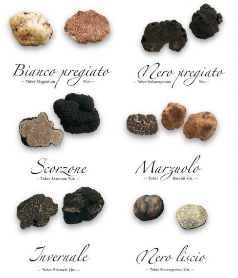 Truffles They can all be found around Acqualagna, Le Marche, Italy
