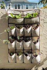 shoe holders garden