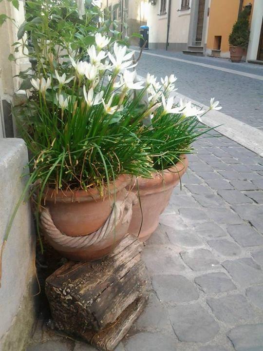 Domus Mariae Castel Gandolfo
