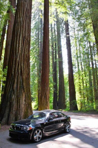 Avenue Of The Giants Scenic Drive Through California S