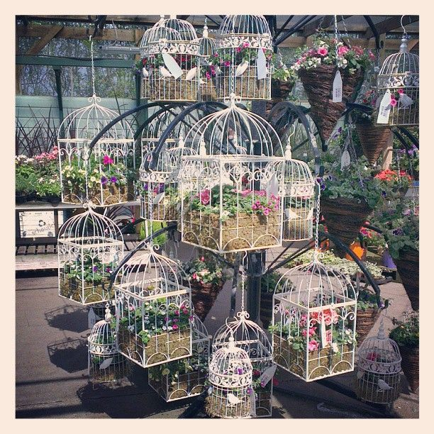 Love this birdcage display I spotted in my local garden centre - so cute