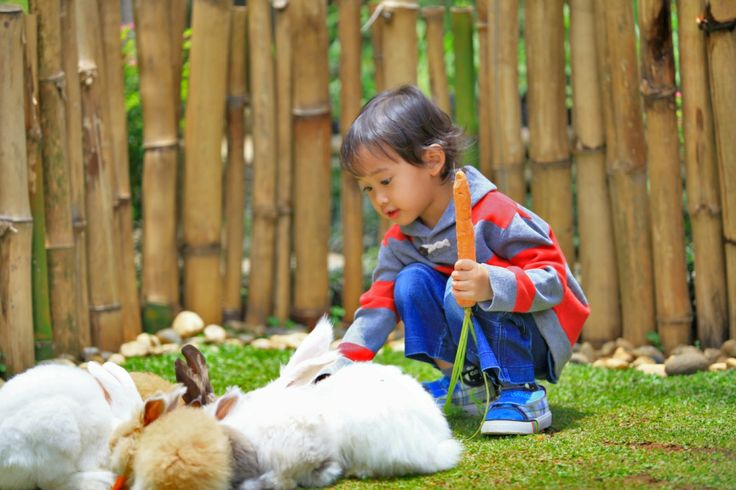 Kids and family are highly recommended to visit The Rabbit Garden, see how attractive they are! At the same time the kids will also gain new information on vegetables, spices and fruits, which grow in rabbit garden area. Open Daily from 08.00 am to 04.00 pm.
