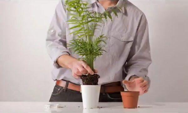 Jak Prawidlowo Dbac O Rosliny Sposob Na Wszystko Porady Domowe Sposoby Jak Zrobic Herb Pots Plants Planter Design