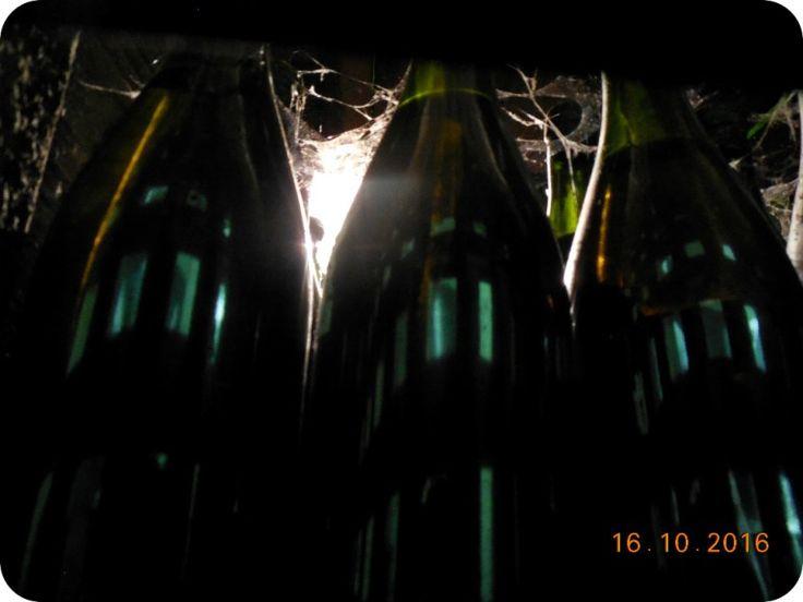 Vinuri vechi la Banu Maracine