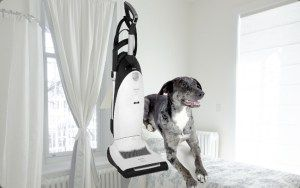 Miele Cat and Dog Upright Vacuum #Miele #MieleUpright #MieleBrand #MieleCat&Dog #catdog #catanddog #MieleVacuum #cathair #doghair #pethair #petcleaning