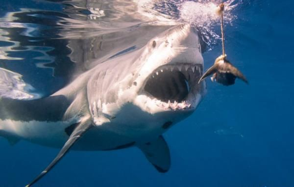 Explore The Beauty Of Caribbean: 13 Best Images About Isla Guadalupe On Pinterest