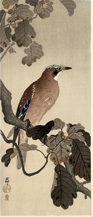 hanga gallery . . . torii gallery: Jay on a Oak Branch by Ohara Koson