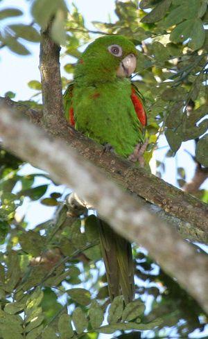 3. El catey: a parrot